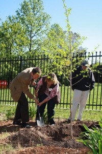TAMS Minister Rattenbury, FGF Coordinator Lesley Pattinson and David Fetherston planting gingko IMG_5762
